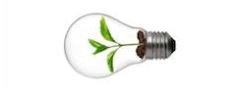 Picture of a plant inside a light bulb